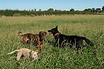 Fosse Meadows at Stud Farm, North Kilworth Leicestershire August 2016. Viv and dogs.