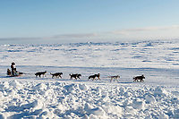 Aaron Burmeister runs on the trail on the Bering Sea heading toward the finish at Nome on Wednesday March 14th during the 2018 Iditarod Sled Dog Race.  <br /> <br /> Photo by Jeff Schultz/SchultzPhoto.com  (C) 2018  ALL RIGHTS RESERVED