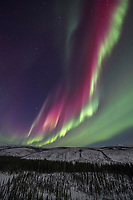 The aurora arcs in green and violet colors of the White Mountains National Recreation Area, Interior, Alaska.