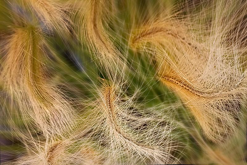 Ornamental grasses.