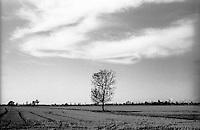 Parco Agricolo Sud Milano presso Gaggiano. Albero in mezzo ai campi --- Rural Park South Milan near Gaggiano. Tree in the middle of fields