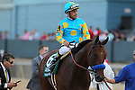 April 11, 2015: American Pharoah with jockey Victor Espinoza aboard after winning the Arkansas Derby at Oaklawn Park in Hot Springs, AR. Justin Manning/ESW/CSM