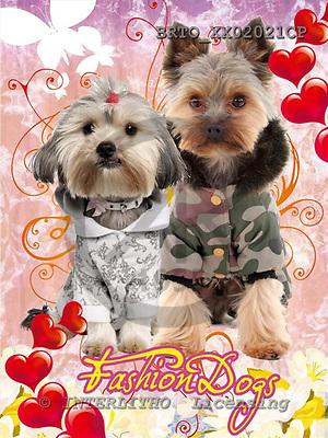 Alfredo, ANIMALS, dogs, photos+++++,BRTOXX02021CP,#a# Hunde, perros