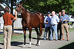 Hip #123 Tiznow - Memories of Silver colt at the  Keeneland September Yearling Sale.  September 9, 2012.