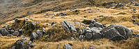 Alpine vegetation with rock stacks, Westland Tai Poutini National Park, UNESCO World Heritage Area, West Coast, New Zealand, NZ