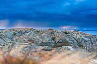 Stormy skies, West Sweden