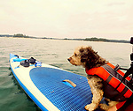 Rico with a life jacket on my paddle board on the waters off Vinalhaven