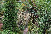 Foliage garden Roger Raiche Berkeley Maybeck Cottage garden