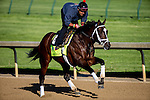 APRIL 27, 2015: Materiality, trained by Todd Pletcher, exercises in preparation for the 141st Kentucky Derby at Churchill Downs in Louisville, Kentucky. Jon Durr/ESW/Cal Sport Media