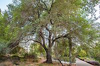 UCD Trees Sept 2021