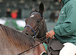"""October 04, 2014: Leigh Court and jockey Gary Boulanger win the 34th running of The Thoroughbred Club of America Grade 2 """"Win and You're In Filly & Mare Sprint Division"""" $200,000 at Keeneland Racecourse.  Candice Chavez/ESW/CSM"""
