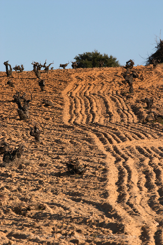 tempranillo sandy soil Bodegas Vinas del Cenit, DO Tierra del Vin de Zamora spain castile and leon