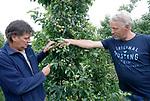 Foto: VidiPhoto<br /> <br /> DRUMPT – Fruittelers in de regio Tiel maken zaterdag de schade op na de orkaan en allesverwoestende hagelbui van vrijdagmiddag. Niet alleen zijn veel bomen beschadigd, maar zo'n 60 ha. aan hardfruit en 10 ha. aan kersen en aardbeien is volledig vernietigd. Bij de kersen was de oogst net begonnen. De Nederlandse Fruittelers Organisatie schat de schade in de Betuwe op enkele miljoenen euro's. Bij sommige telers is de complete oogst verwoest. Foto: Bert de Haan (l) en Kees van Arkel bekijken de schade aan het fruit bij het bedrijf van Van Arkel.