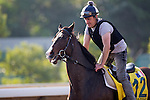 SHA TIN,HONG KONG-DECEMBER 09: Signs Of Blessing,trained by Francois Rohaut,exercises in preparation for the Hong Kong Sprint at Sha Tin Racecourse on December 9,2016 in Sha Tin,New Territories,Hong Kong (Photo by Kaz Ishida/Eclipse Sportswire/Getty Images)