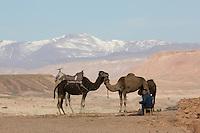 Cameleer near Ouazazarte, Morocco