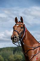 NZL-Kallista Field rides Felix Westfalia. 2020 NZL-Bates Saddles NZ Dressage Championships. NEC Taupo. Saturday 21 November 2020. Copyright Photo: Libby Law Photography