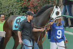 #9 Ireland with before the running of the Honeybee Stakes (Grade III) at Oaklawn Park in Hot Springs, Arkansas-USA on March 8, 2014. (Credit Image: © Justin Manning/Eclipse/ZUMAPRESS.com)