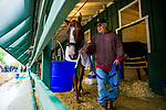 BALTIMORE, MD - MAY 17:  Justify grabs a drink of water after galloping at Pimlico Racecourse on May 17, 2018 in Baltimore, Maryland. (Photo by Alex Evers/Eclipse Sportswire/Getty Images)