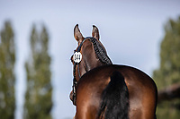 BEL-Lara de Liedekerke-Meier presents Ducati d'Arville during the First Horse Inspection. 2021 SUI-FEI European Eventing Championships - Avenches. Switzerland. Wednesday 22 September 2021. Copyright Photo: Libby Law Photography