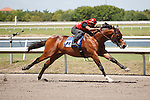 #121Fasig-Tipton Florida Sale,Under Tack Show. Palm Meadows Florida 03-23-2012