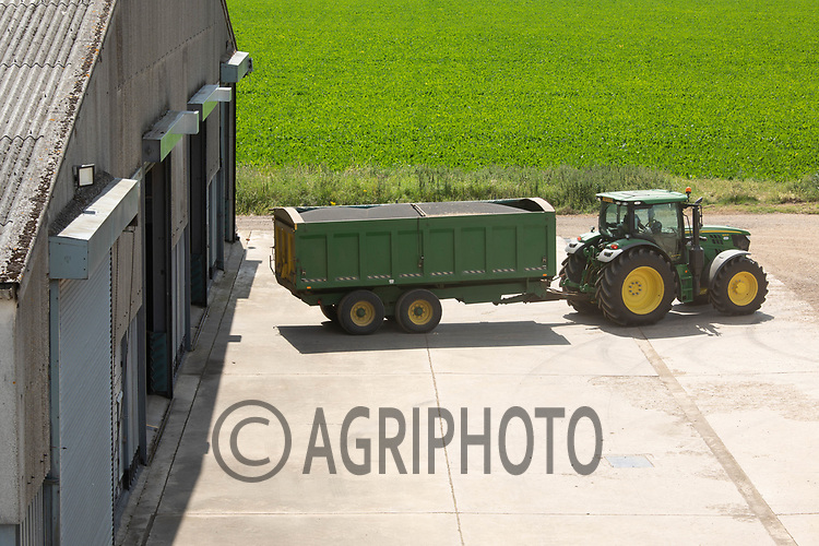 Oilseed rape going into on farm store <br /> ©Tim Scrivener Photographer 07850 303986<br />      ....Covering Agriculture In The UK....