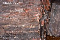 CX15-524z Petrified Wood Fossil