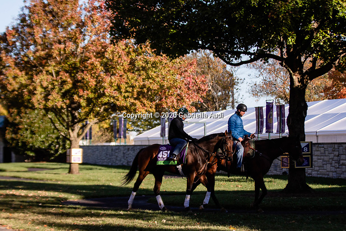 November 4, 2020: Casa Creed, trained by trainer William I. Mott, walks around the paddock before the Breeders' Cup Mile at Keeneland Racetrack in Lexington, Kentucky on November 4, 2020. Gabriella Audi/Eclipse Sportswire/Breeder's Cup/CSM