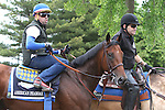 June 5, 2015: Triple Crown hopeful American Pharoah heads back to his barn after his morning gallop at Belmont Park, Elmont, NY. Joan Fairman Kanes/ESW/CSM