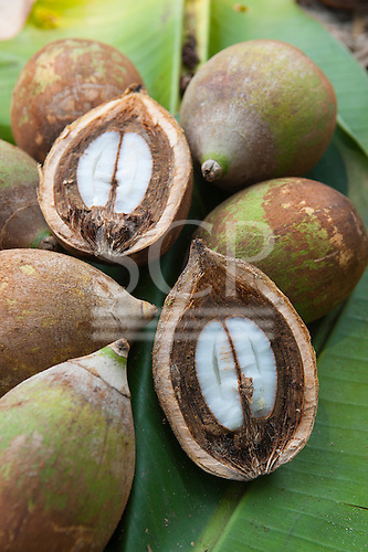 Rainforest Babassu nuts cut open to show the kernel.