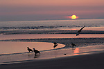 Silhouette of bald eagles on the beach in Homer, Alaska.