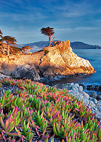 Lone Monterey Cypress tree and ocean with Ice Plant. 17 Mile Drive. Pebble Beach, California