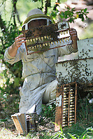 A queen-breeding apiary in springtime. Modern beekeeping necessitates replacing queens every two to three years. The production of royal jelly also requires the constant breeding of queens.