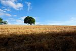 Europa, DEU, Deutschland, Hessen, Schlitzer Land, Schlitz, Agrarlandschaft, Getreide, Feld, Baum, Kategorien und Themen, Landwirtschaft, Landwirtschaftlich, Agrar, Agrarwirtschaft, Wetter, Himmel, Wolken, Wolkenkunde, Wetterbeobachtung, Wetterelemente, Wetterlage, Wetterkunde, Witterung, Witterungsbedingungen, Wettererscheinungen, Meteorologie, Bauernregeln, Wettervorhersage, Wolkenfotografie, Wetterphaenomene, Wolkenklassifikation, Wolkenbilder, Wolkenfoto<br /> <br /> [Fuer die Nutzung gelten die jeweils gueltigen Allgemeinen Liefer-und Geschaeftsbedingungen. Nutzung nur gegen Verwendungsmeldung und Nachweis. Download der AGB unter http://www.image-box.com oder werden auf Anfrage zugesendet. Freigabe ist vorher erforderlich. Jede Nutzung des Fotos ist honorarpflichtig gemaess derzeit gueltiger MFM Liste - Kontakt, Uwe Schmid-Fotografie, Duisburg, Tel. (+49).2065.677997, ..archiv@image-box.com, www.image-box.com]