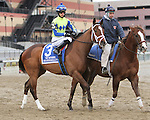 Escapefromreality post parade_ Revolutionary (#2) with Javier Castellano splits horses to win the 133rd running of the Grade 3  Withers Stakes for 3-year olds, going 1 1/16 on the inner dirt, at Aqueduct Racetrack.  Trainer Todd Pletcher.  Owner Winstar Farms