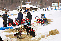 Paul Gebhart works with his dogs shortly after arriving at Ruby on Friday during Iditarod 2008
