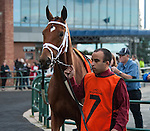TORONTO, ON - OCTOBER 16: Al's Gal #7, ridden by Florent Geroux, wins the E.P. Taylor S. at Woodbine Racetrack on October 16, 2016 in Toronto, ON. (Photo by Sophie Shore/Eclipse Sportswire/Getty Images)