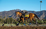 ARCADIA, CA - NOVEMBER 03:  Hoppertunity and Dana Barnes gallop on November 03, 2016 in Arcadia, California. (Photo by Alex Evers/Eclipse Sportswire/Getty Images)