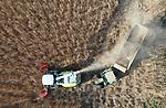 Foto: VidiPhoto<br /> <br /> ACHTERBERG – Bij kalvermester H. G. Henken uit het Utrechtse Achterberg wordt dinsdag met de maïskneuzer van Loonbedrijf E. J. G Gerritsen uit Heelsum de eerste oogst van het jaar binnengehaald: 5 ha. miscanthus, oftewel olifantsgras. Henken gebruikt het Afrikaanse bamboeachtige riet als biomassa voor zijn verwarmingsinstallaties, waarmee hij per jaar 45.000 kuub gas bespaart. Miscanthus groeit als kool en kan 25 jaar lang geoogst worden. Het is het enige product dat 85 procent droge stof bezit. Henken was de eerste (2007) en lange tijd de enige producent in Nederland van olifantsgras. Inmiddels wordt het ook gebruikt bij Schiphol om de overlast van ganzen tegen te gaan en in Groningen voor het vervaardigen van bioplastic. Het supergewas kan 30 ton CO2 per hectare per jaar vastleggen.