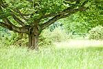 """""""Europa, DEU, Deutschland, Baden-Wuerttemberg, Schwaebische Alb, Bissingen an der Teck, Naturdenkmal """"""""Wacholderheide im Gewann Burz"""""""", Alte Baeume, Natur, Umwelt, Landschaft, Jahreszeiten, Stimmungen, Landschaftsfotografie, Landschaften, Landschaftsphoto, Landschaftsphotographie, """"<br /> <br /> [Fuer die Nutzung gelten die jeweils gueltigen Allgemeinen Liefer-und Geschaeftsbedingungen. Nutzung nur gegen Verwendungsmeldung und Nachweis. Download der AGB unter http://www.image-box.com oder werden auf Anfrage zugesendet. Freigabe ist vorher erforderlich. Jede Nutzung des Fotos ist honorarpflichtig gemaess derzeit gueltiger MFM Liste - Kontakt, Uwe Schmid-Fotografie, Duisburg, Tel. (+49).2065.677997, ..archiv@image-box.com, www.image-box.com]"""