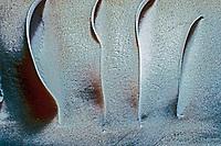 gills of Caribbean reef shark, Carcharhinus perezii, Bimini, Bahamas, Caribbean Sea, Atlantic Ocean