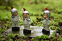 29/05/15<br /> <br /> Astronaut gnomes working for 'GNASA'!<br /> <br /> For one group of hardy folk, today's rain only adds to the fun that can be had by the beach, fishing in the river, or playing in the woods.<br /> <br /> The gnomes, and a few pixies and fairies, make up a collection, now believed to be close to 2,000 individuals, that 'live' at the Gnome Reserve near Bideford, North Devon.<br /> <br /> Visitors are asked to wear gnome hats, so as not to scare the gnomes who feature as the largest collection in the Guinness Book of World Records. <br /> <br /> Ann Atkin's collection began in 1979 and features traditional gnomes on toad-stools to Olympian athletes, astronauts who work for 'GNASA', a beach scene complete with gnomes in bikinis, a queue for the ice-cream van, Punch and Judy gnomes and another floating on a lilo. Other gnomes can be scene kissing, and flashing their bottoms as the visit the Gents and Ladies toilets. <br /> <br /> <br /> All Rights Reserved - F Stop Press.  www.fstoppress.com. Tel: +44 (0)1335 418629 +44(0)7765 242650