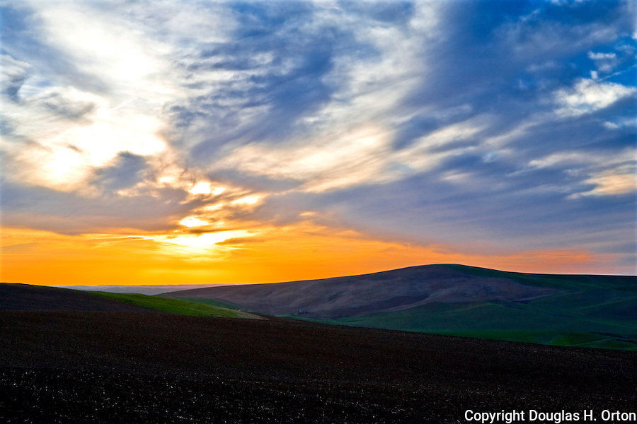 Late Evening in the Palouse Hills, Washington, known as the heart of wheat farming in the United States is also famous for its rolling scenery.  This landscape is at the base of Kamiak Butte, a Whitman County Park offering camping, picknicking, hiking, and incredible views of both Idaho and Washington Palouse country.