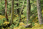 Tongass National Forest, Alaska