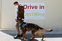 One of the dogs with its trainer of NGS during the demonstration at Campus Bio-Medico of anti covid dogs, trained to recognize Covid-19 from a sweat-soaked sample. To valid this experimental method, the dogs are being tested, crossing the data with 1000 molecular swabs made at the drive-in. Patients undergoing the swab, were asked to take their sweat with a sterile cotton that the dogs will smell in a sterile room. <br /> Rome (Italy), March 29th 2021<br /> Photo Samantha Zucchi Insidefoto