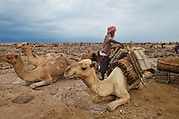 salt diggers in Ethiopa charge camel to transport salt blocks to the far city