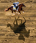 May 13, 2021: Crowded Trade exercises for the Preakness Stakes at Pimlico Race Course in Baltimore, Maryland. Scott Serio/Eclipse Sportswire/CSM