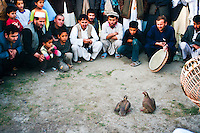 Kowk Fighting is one of Afghanistan's cherished hobbies. Kowk are specially bred fighting partridges. <br /> The fights feature bookmakers and handfuls of cash as the birds fly around, pecking at their opponents. It is rarely bloody, and the winner is the bird that drives the other bird away.