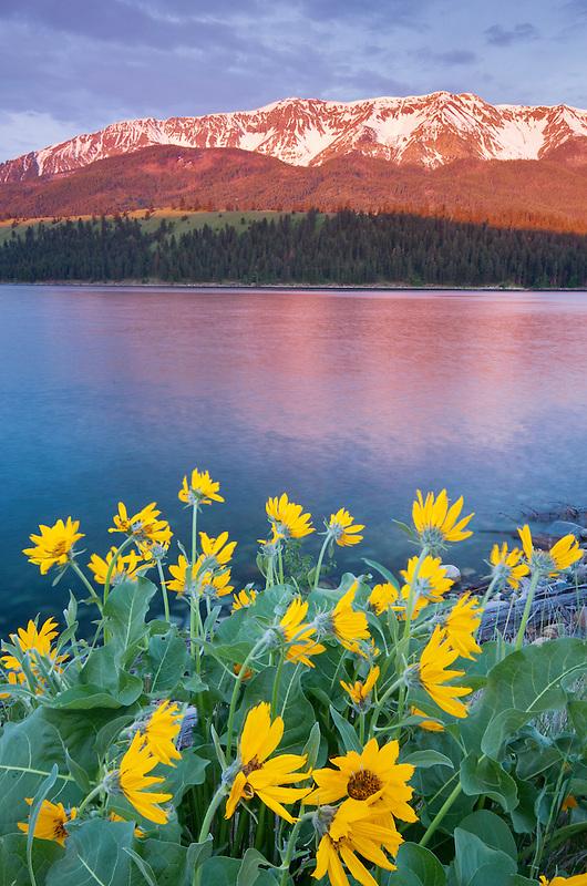 Wallowa Lake and Mountains with Balsomroot. Oregon