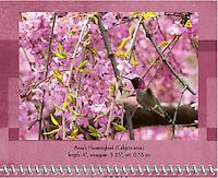 April 2011 Birds of a Feather Calendar