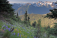 A scene along a slope filled with blooming wildflowers on Sourdough Ridge, displaying the Cowlitz Chimneys and Mount Adams on the distant horizon, formed by volcanic action. Mount Rainier National Park, Washington State.....Photographed on digital media.